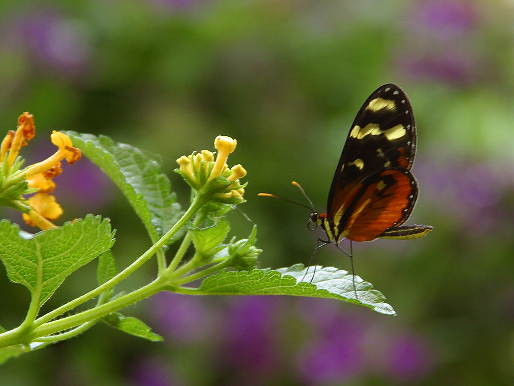 Uumm Nectar!